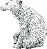 Hand Drawing Bear
