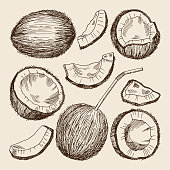 Hand drawing illustrations of different sides of coconut. Vector pictures isolate