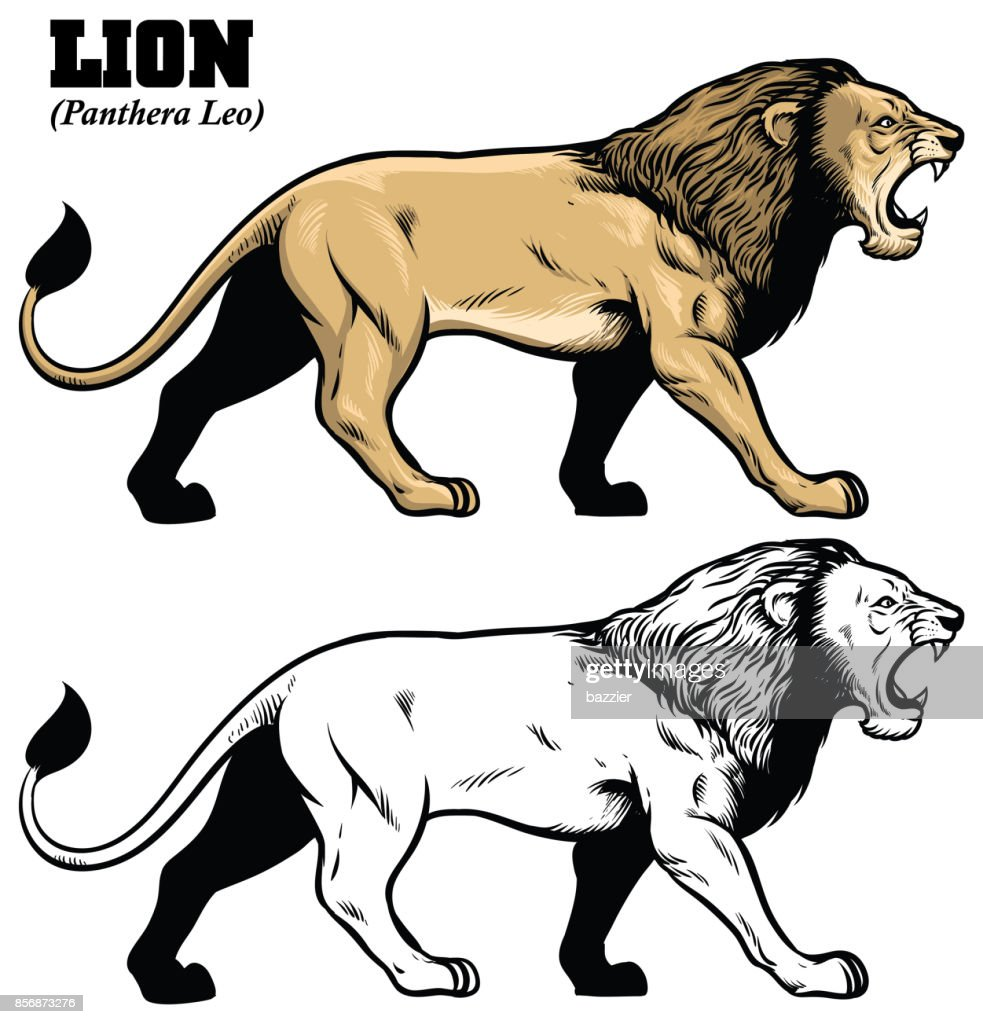 hand drawing of lion