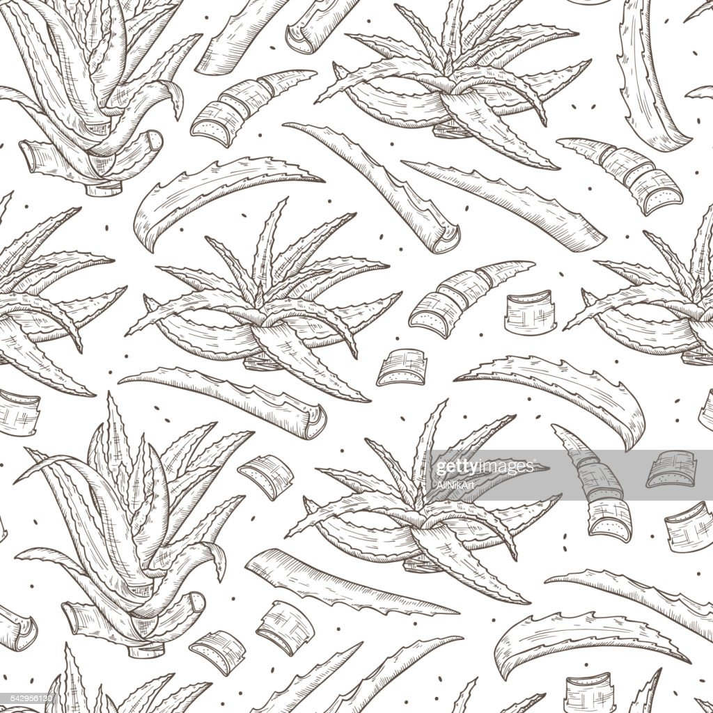 Hand drawn Aloe Vera plant leaves Seamless pattern. Medicinal plants