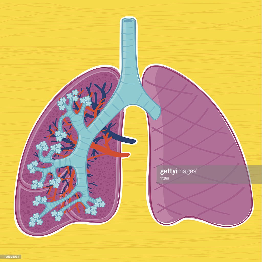 Hand Drawn Anatomy Of The Human Lungs Vector Art Getty Images