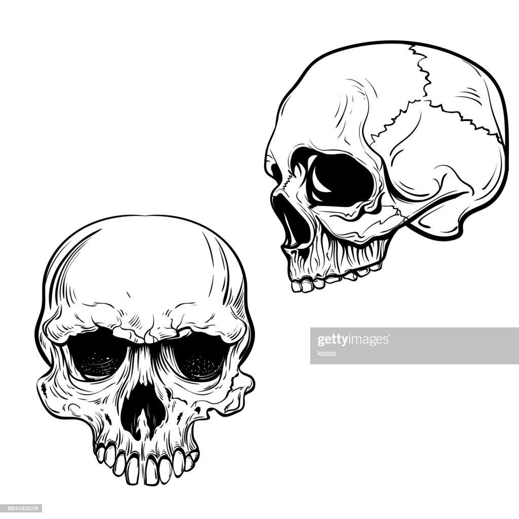 Hand Gezeichnet Anatomie Schädel Vektor Vektorgrafik | Getty Images