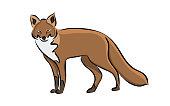 Hand drawn animal fox