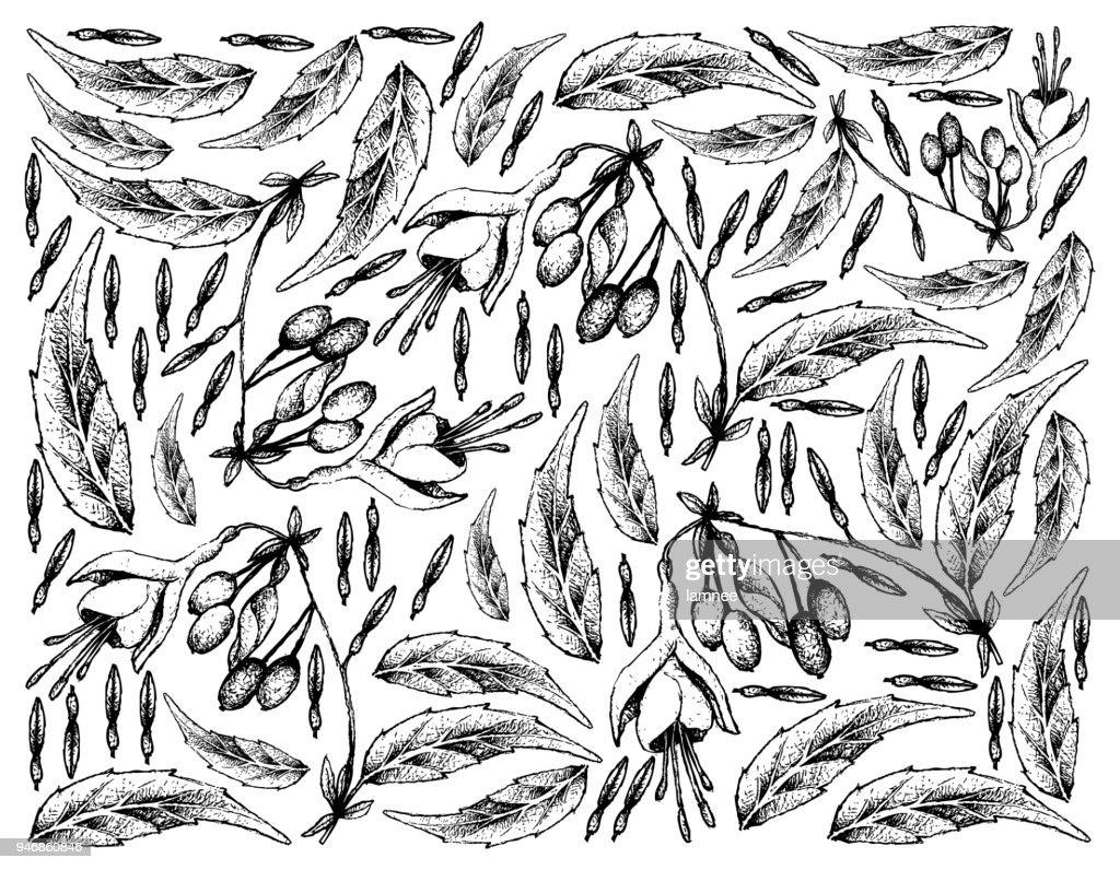 Hand Drawn Background of Brinco de Princesa Frutis