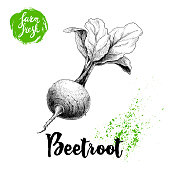 Hand drawn beet root with leafs. Sketch vintage vector illustration isolated on white background. Farm fresh vegetable.