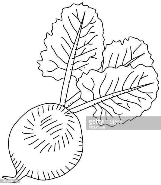 hand drawn beetroot - common beet stock illustrations, clip art, cartoons, & icons