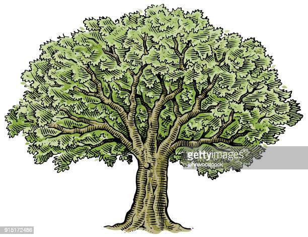 hand drawn big tree vector - tree trunk stock illustrations, clip art, cartoons, & icons