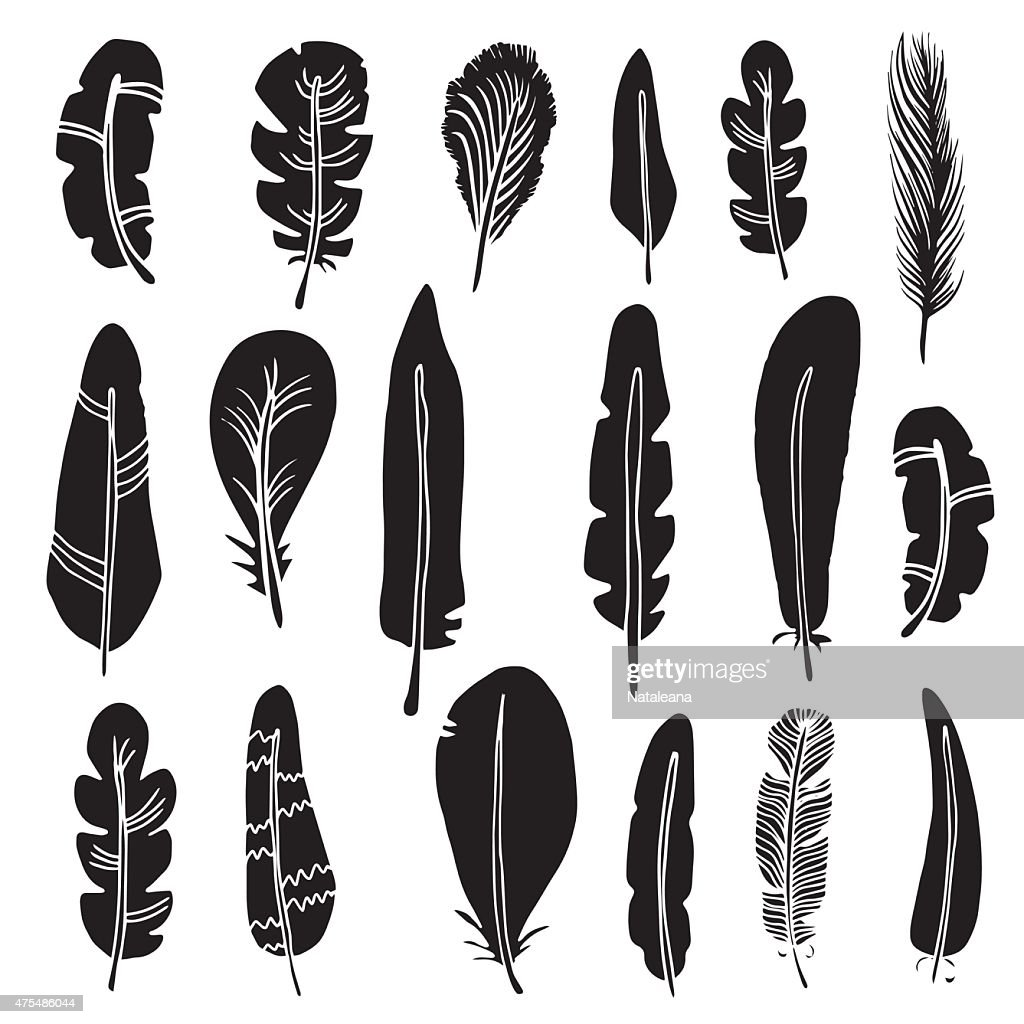 Hand drawn bird feathers