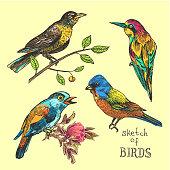 hand drawn bird