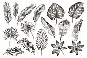Hand drawn branches and leaves of tropical plants. Black floral set isolated on white background. High detailed botanical illustration
