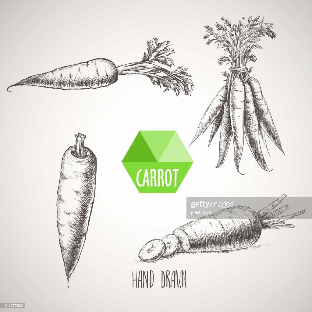 Hand drawn carrot set.
