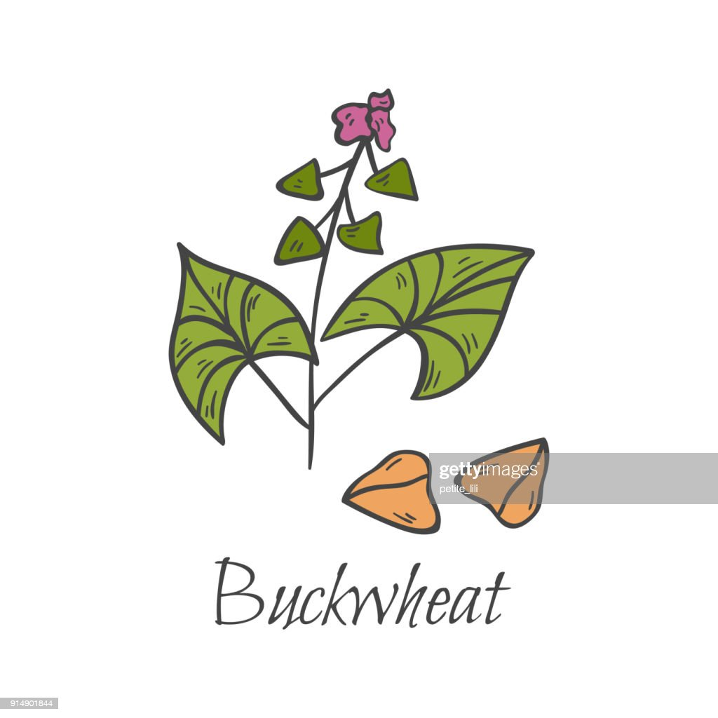Hand drawn cartoon buckwheat
