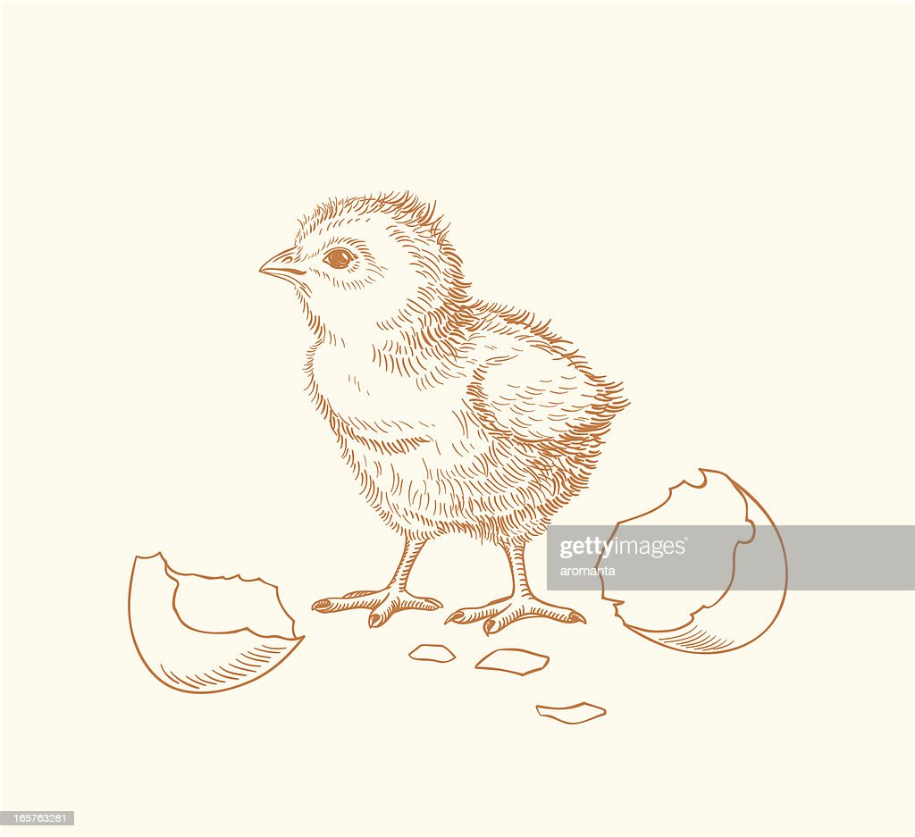 Hand drawn chick hatched out of an egg