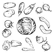 Hand drawn different vegetables
