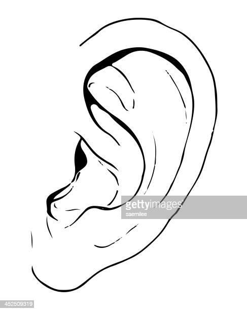 hand drawn ear - ear stock illustrations, clip art, cartoons, & icons