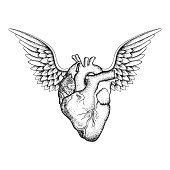 Hand drawn elegant heart with wings