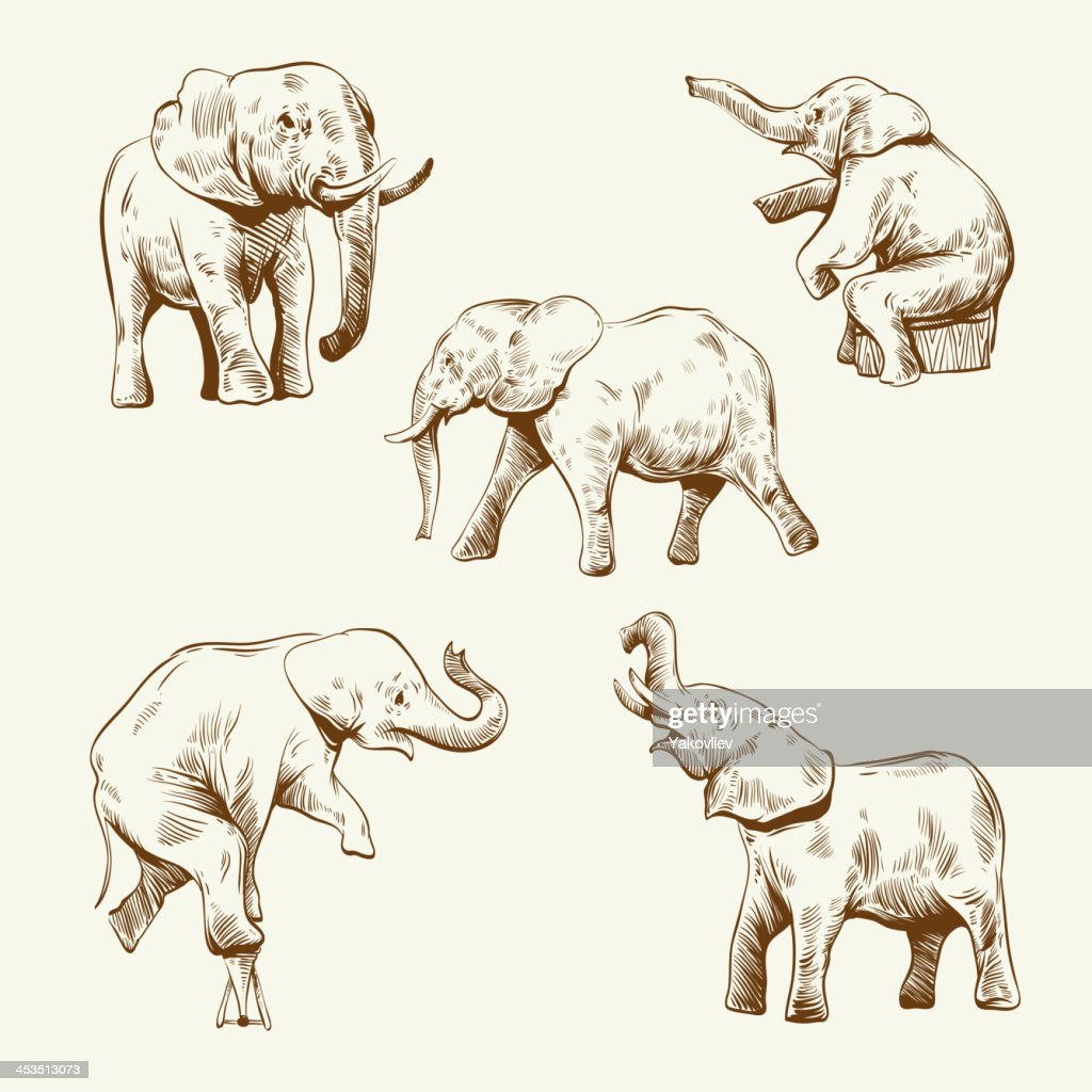 Hand drawn elephant set isolated on a white backgrounds