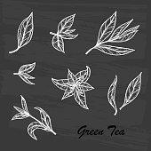 Hand drawn engraving style Green tea leaves set. Vector illustration