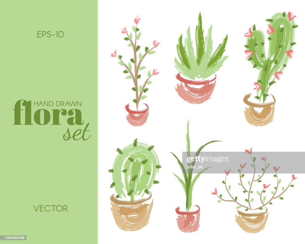 Hand drawn floral set. Cactus, flower, plant and aloe vera.