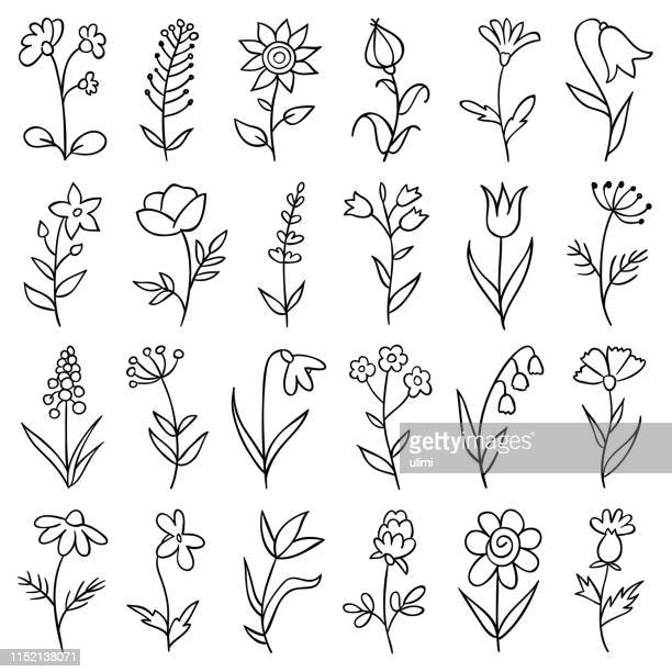 hand drawn flowers - lavender plant stock illustrations