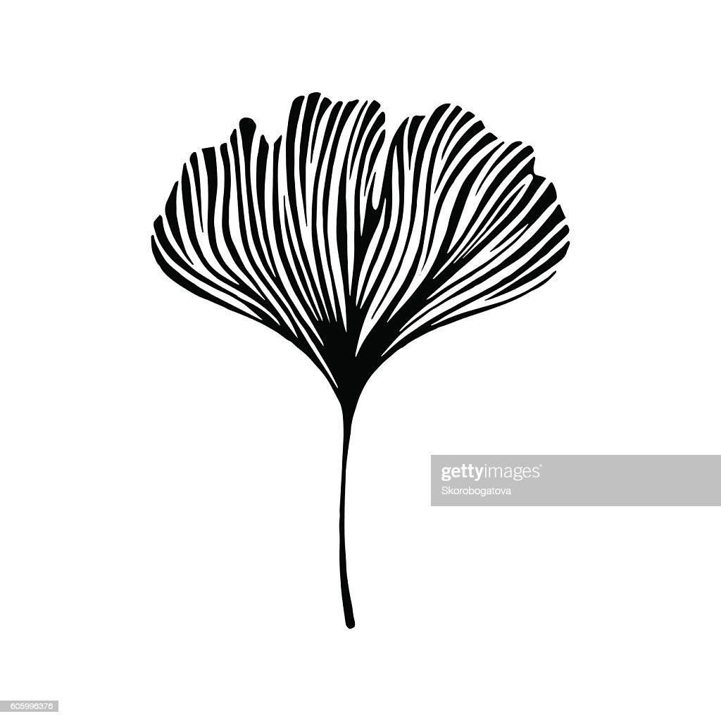 Hand drawn ginkgo leaf. Eco icon.