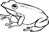 hand drawn, grunge, sketch illustration of tree frog