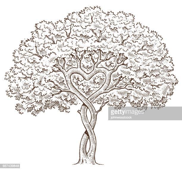 hand drawn heart tree - family tree stock illustrations, clip art, cartoons, & icons