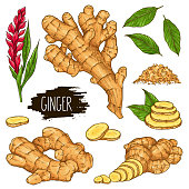 Hand drawn herbal set of ginger isolated on white background