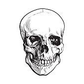 Hand drawn human skull, anatomical model, sketch style vector illustration