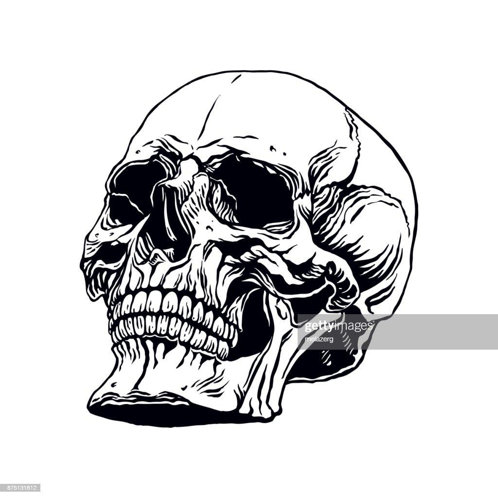 Hand Gezeichneten Menschlichen Schädel Vektorgrafik | Getty Images