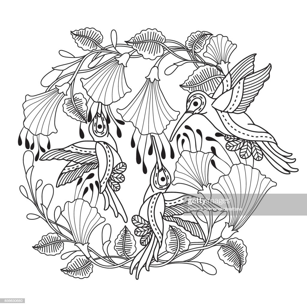 Hand drawn hummingbirds and flower for adult coloring page.