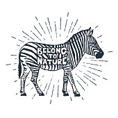 Hand drawn icon with textured zebra vector illustration.