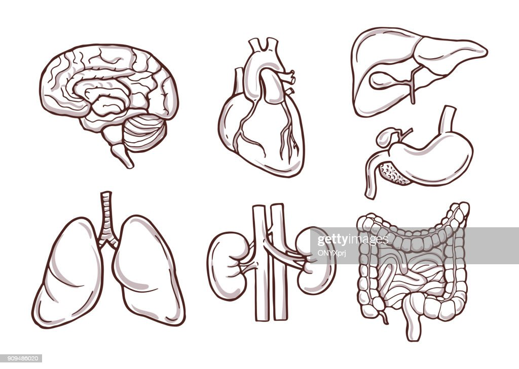 Hand drawn illustration of human organs. Medical pictures