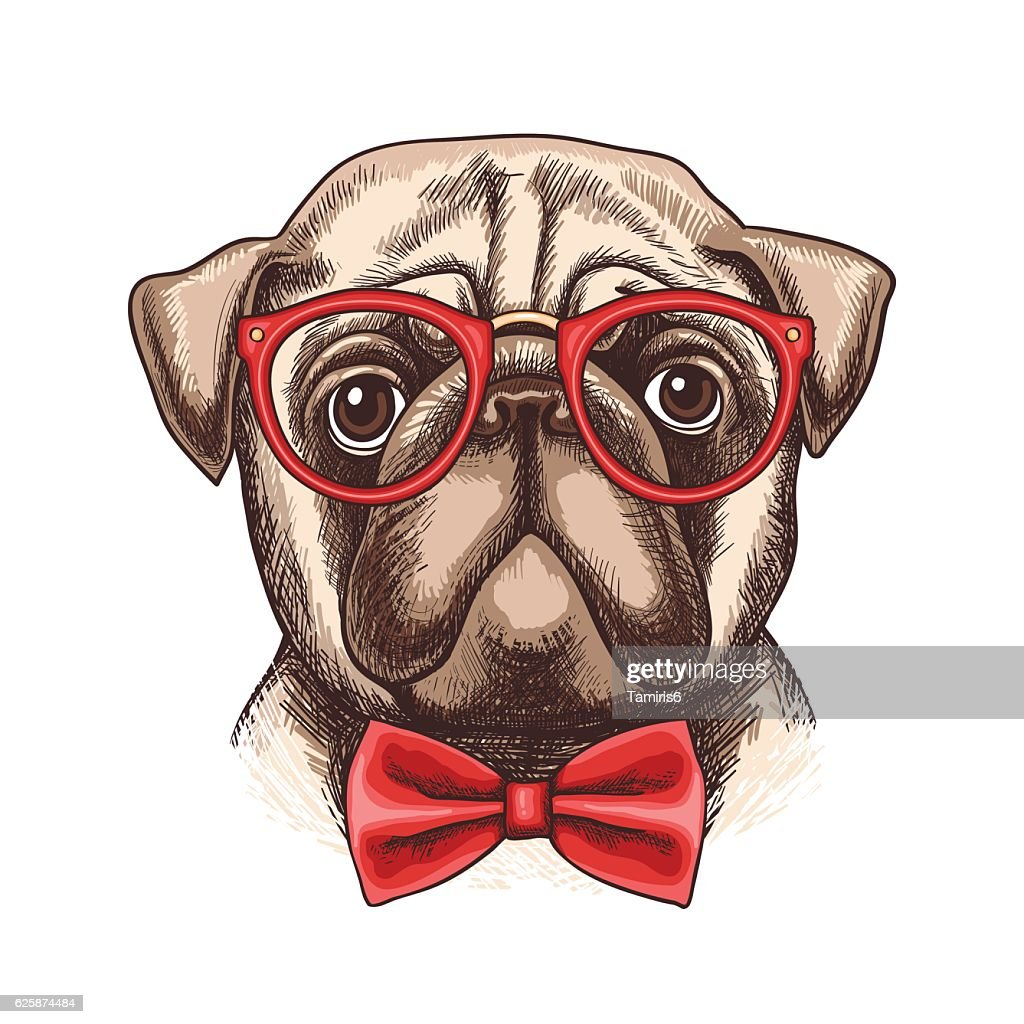 Hand drawn illustration of pug in glasses and bow tie