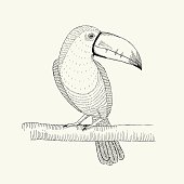 Hand drawn illustration of  toucan bird on the branch