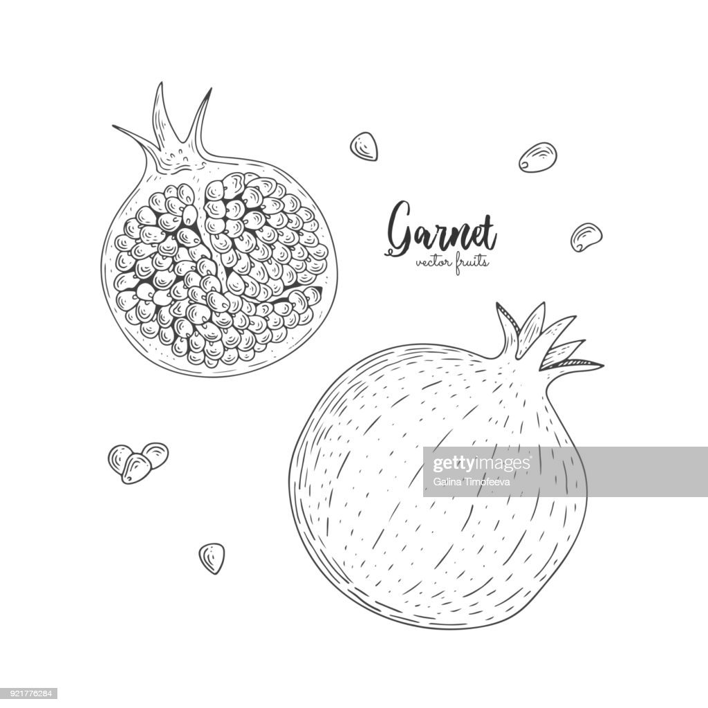 Hand drawn illustrations of garnet isolated on white background. Hand drawn elements for menu, promotion, advertising, greeting cards, wrapping paper, cosmetics packaging, labels, flyer.