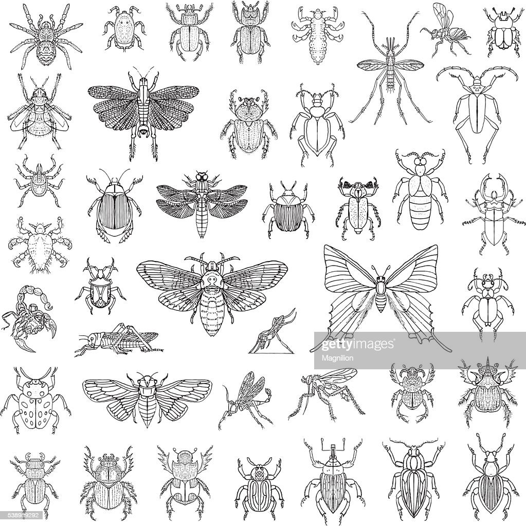 Hand Drawn Insects Vector Set : stock illustration