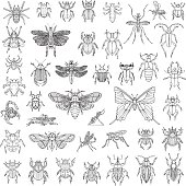 Hand Drawn Insects Vector Set