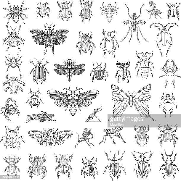 hand drawn insects vector set - odonata stock illustrations, clip art, cartoons, & icons