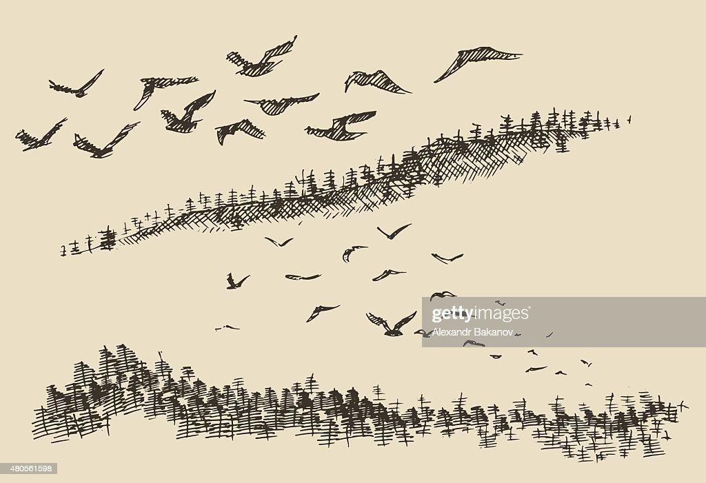 Hand drawn landscape flying birds forest vintage : Vector Art