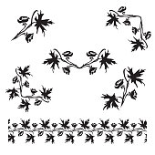 Hand drawn Larkspur (Delphinium