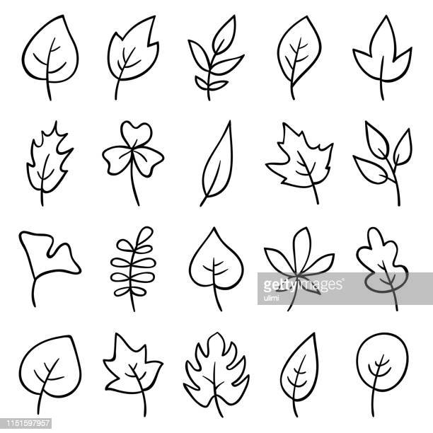 hand drawn leaves - leaf stock illustrations
