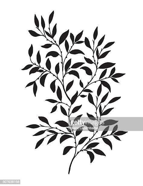 hand drawn leaves vine - vine stock illustrations