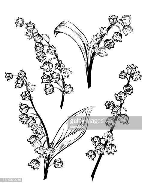 illustrazioni stock, clip art, cartoni animati e icone di tendenza di hand drawn lily of the valley flowers - mughetti