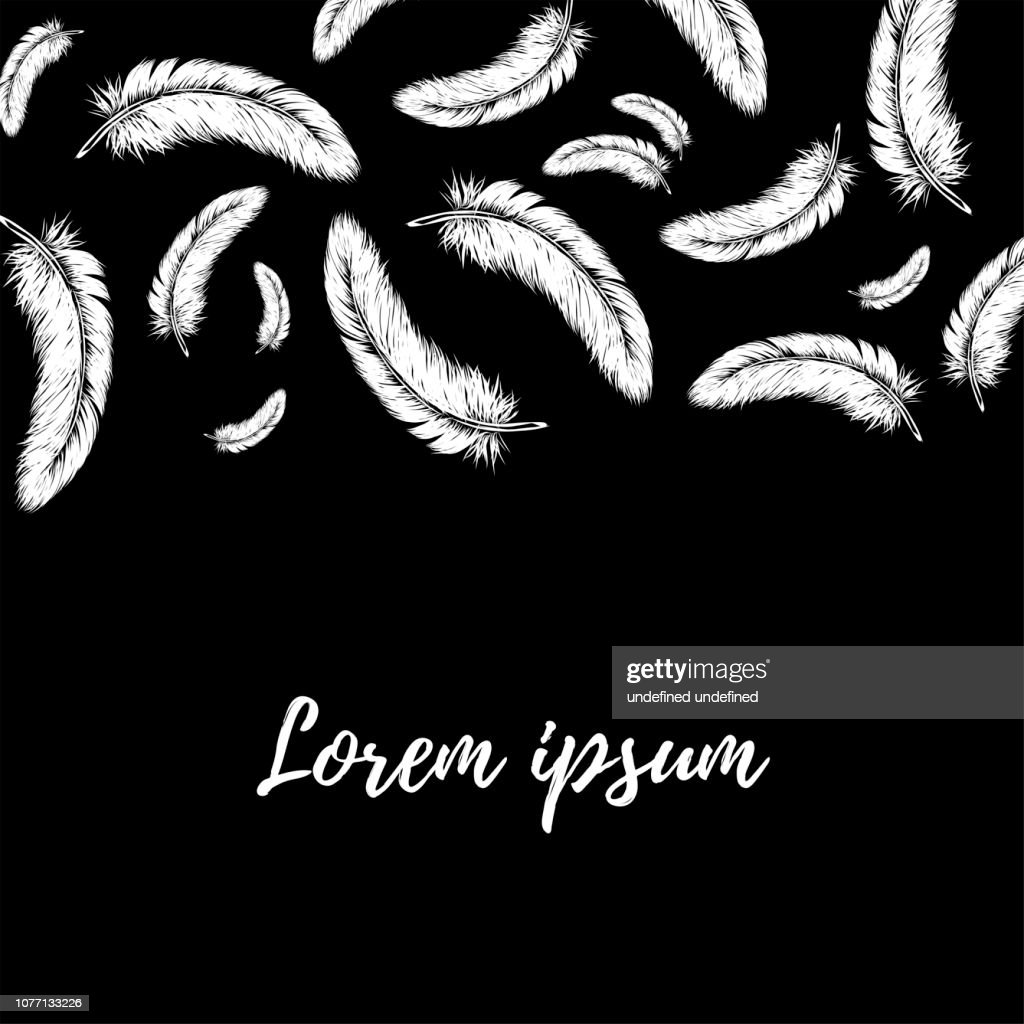 Hand drawn line art style white feather for poster, banner, logo, icon. Fluffy feathers on black background in realistic style. Chalkboard concept. Lightweight sketch illustration, for patterns