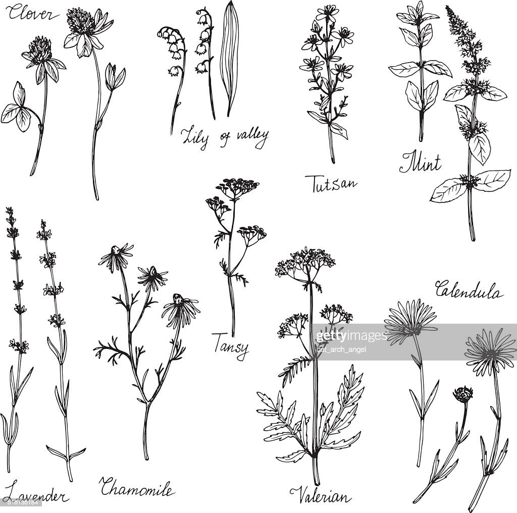 hand drawn medical plants