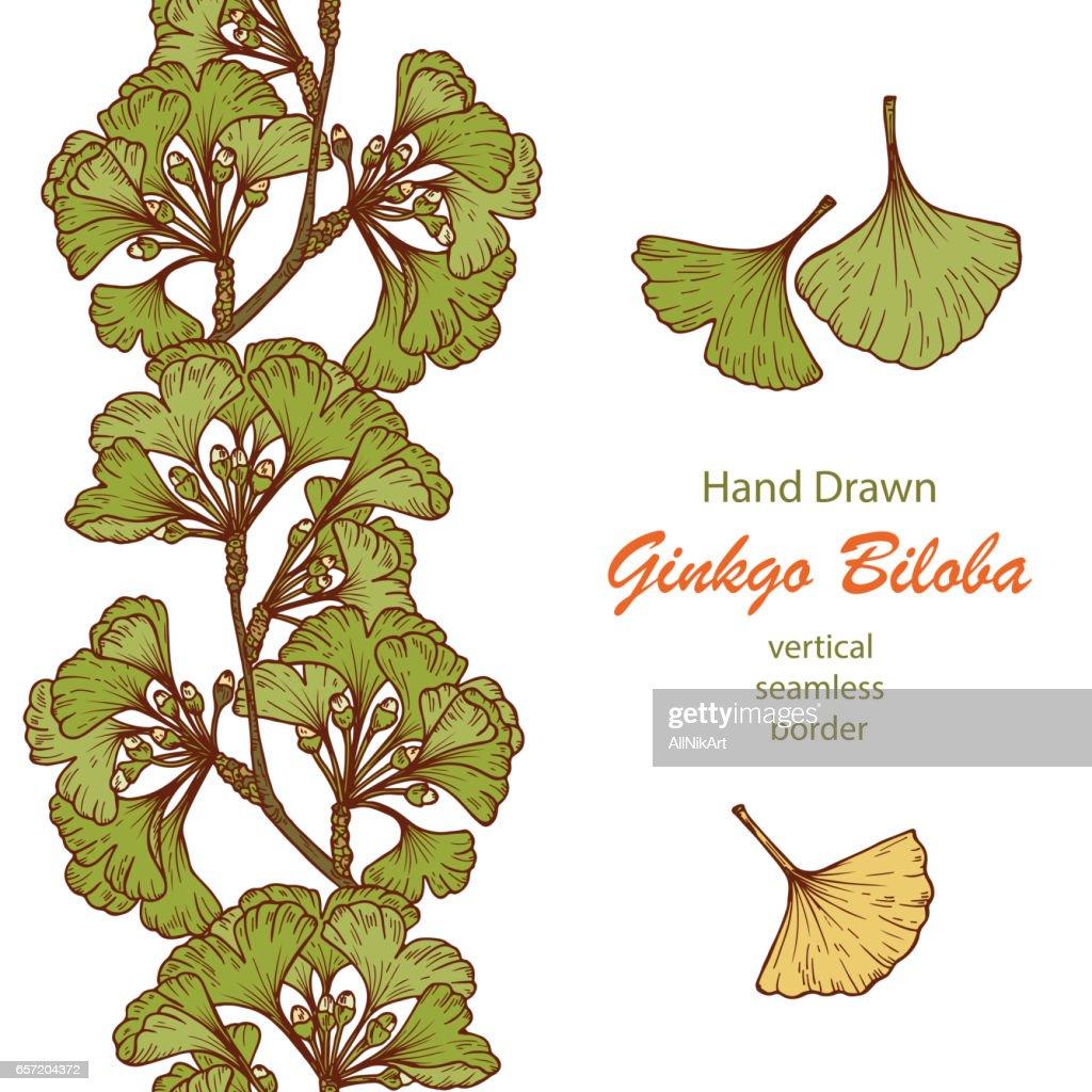 Hand drawn Medicinal plant Ginkgo Biloba Tree. Branches Vertical seamless border and Leaves set. Vector illustration.