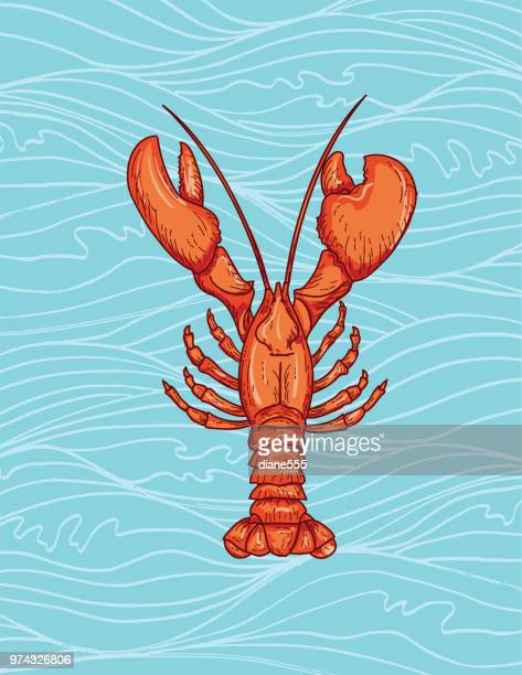 hand drawn nautical elements on a wavy background - lobster stock illustrations