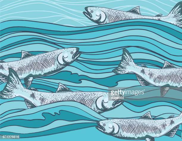 illustrations, cliparts, dessins animés et icônes de hand drawn scènes nautiques avec des éléments de l'océan - saumon