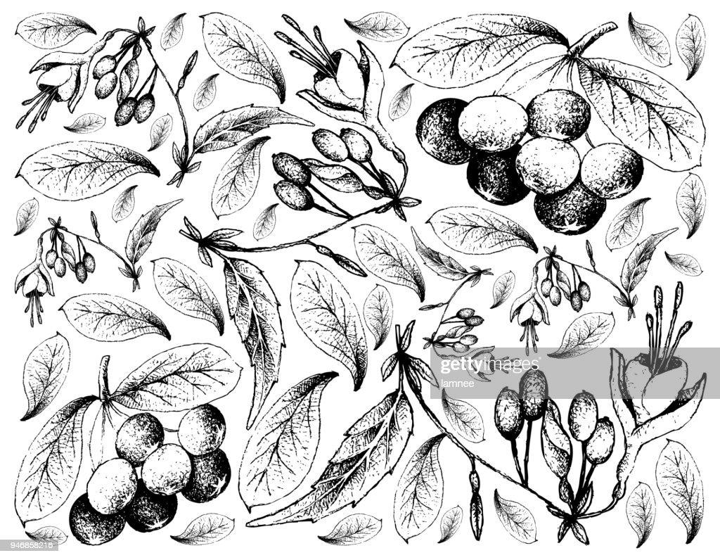 Hand Drawn of Acai Berries and Brinco de Princesa Frutis